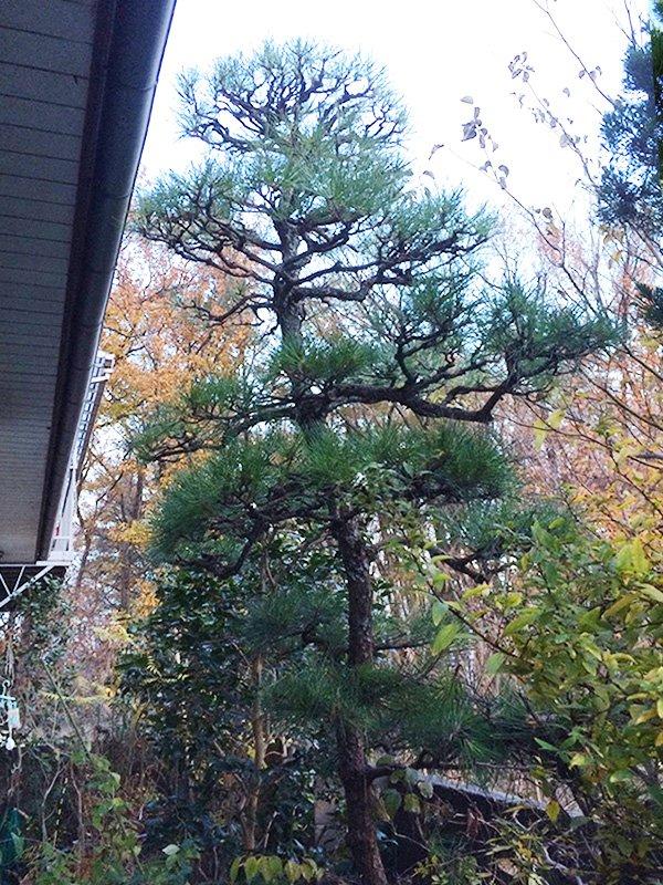 東京都練馬区、庭木の剪定