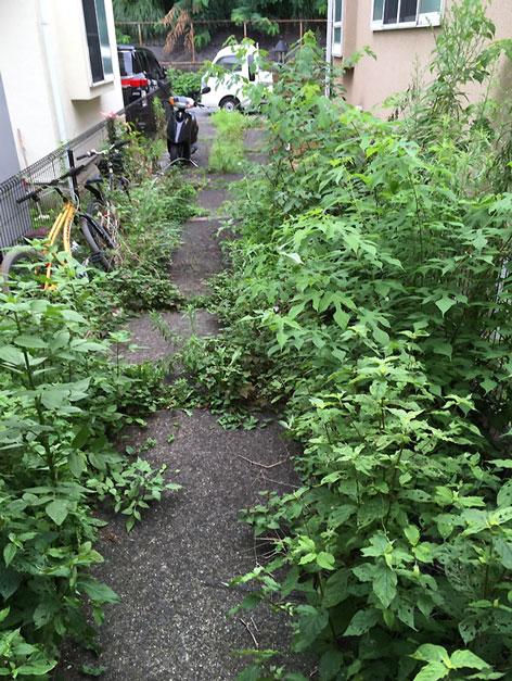 施工前:東京都/除草と防草シートの施工