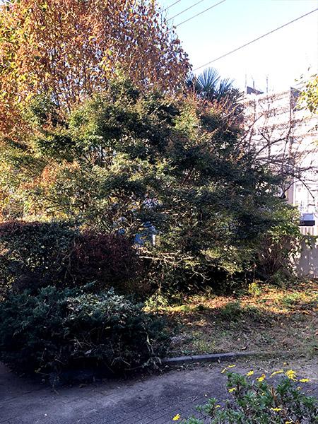 施工前:東京都立川市/お庭のリフォーム